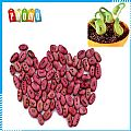 DIY Magic Bean Seed Plant Growing Message Words