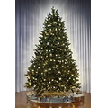 The World's Best Dual Light Balsam Fir - Full - 6 1/2'