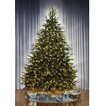 The World's Best Dual Lit Concolor Fir - Slim - 8.5'