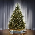 "The World's Best Prelit Fraser Fir - 6 1/2"" Full 60"""